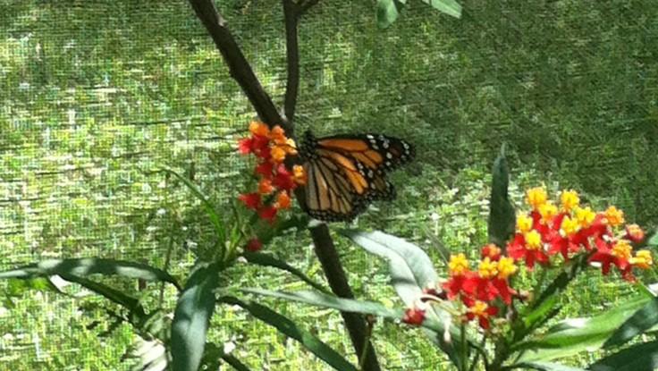 banner monarch