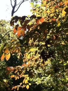 fall leaves in sun